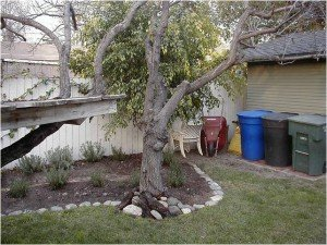 trees for yard