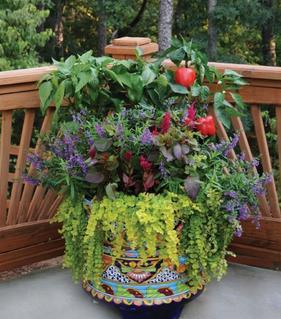 Serenity Garden Design