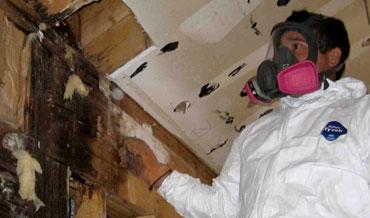 hiring mold inspector