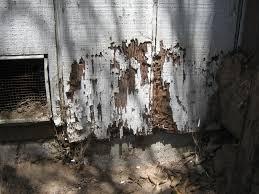 termite-damage-control