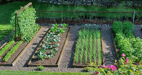 5 actionable tips on starting a vegetable garden for Vegetable garden