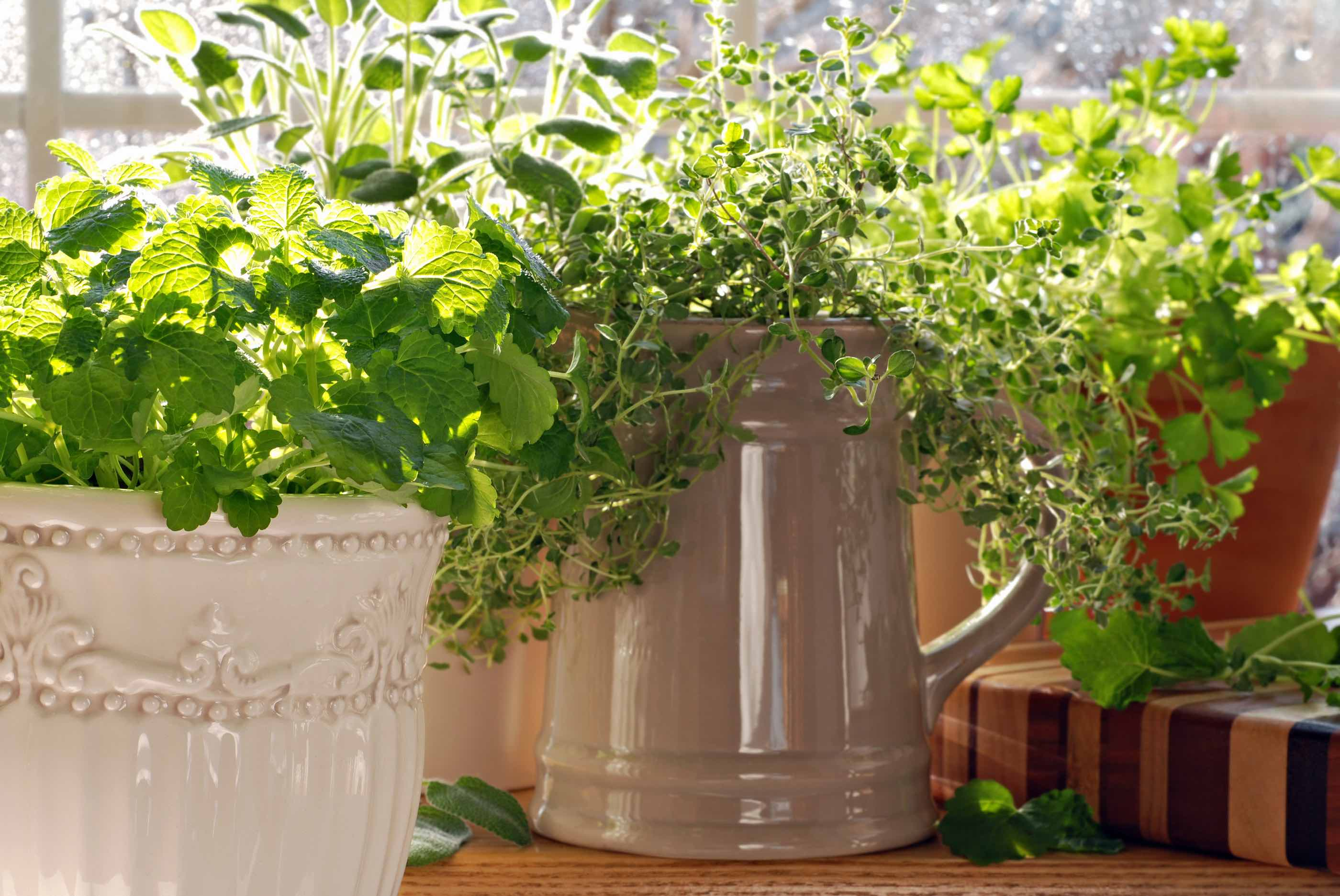 How to get the most mileage out of your herb garden for Kitchen herb garden