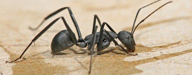 ant-exterminator