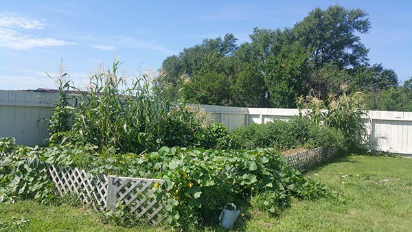 Easiest Vegetables You Can Grow In The Yard