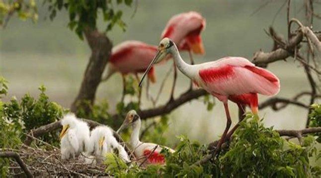 bird-watcher-paradise